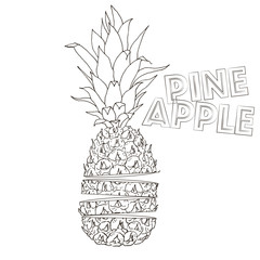 Vector pineapple illustration, hand drawn cutted ananas outlines sketch