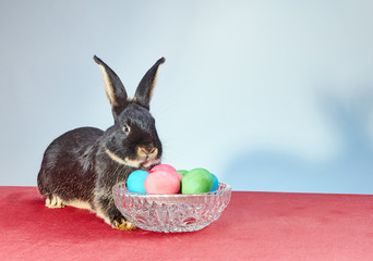 Pretty easter bunny lies near vase with Easter eggs