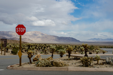 Wall Mural - Stop Sign in Cholla Garden Desert