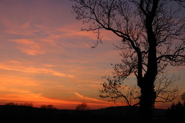 Tree silhouette and sunset