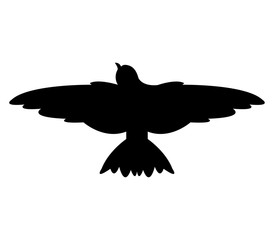 swallow on white background