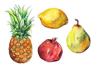 Watercolor pineapple pomegranate lemon pear fruit set isolated