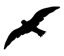 gull on white background