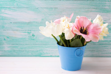 Fresh  spring white narcissus and pink tulips in bucket   on whi
