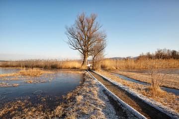 Feuchtgebiet mit Sumpf und Schilfgürtel im Robenhuserriet beim Pfäffikersee, Teil UNESCO Weltkulturerbe