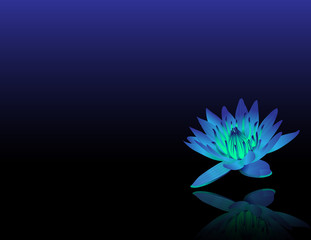 Blue Lotus Reiki Chakra Flower
