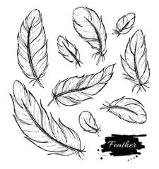 Vector set of hand drawn feather. Ink vintage illustration