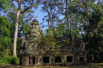 Tree roots growing through the ruins of  Temple at Angkor area, Siem Reap, Cambodia