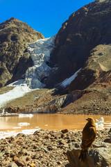 Carrancho Cordillerano, Glaciar El Morado, San Jose de Maipo, Chile.