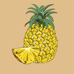 Pineapple in vintage style. Colored vector illustration