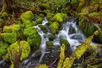 Small Creek Cascade Waterfall