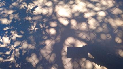 Hand mit Handy den Schattenriss eines Baumes fotografierend