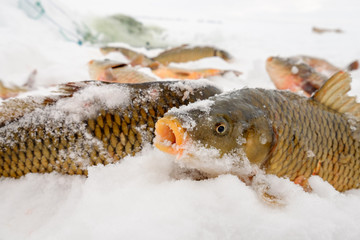 Ice fishing on the frozen lake