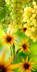 image of flowers and grapes in garden close-up