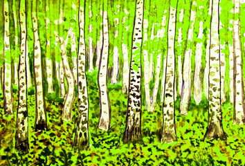 birch forest, painting