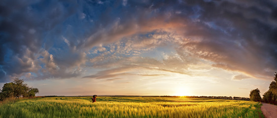 Sunset panorama in spring cereals fields with photographer