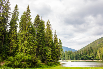 lake among the forest in mountains
