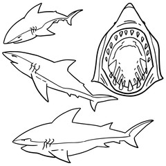 vector set of shark