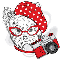 Yorkshire Terrier wearing a beret. Puppy with a camera. Vector illustration.