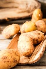ripe potatoes just vykapannaya