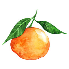 Watercolor ripe orange mandarin citrus fruit isolated
