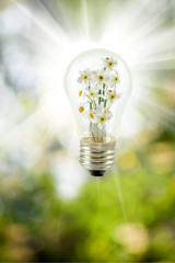 flowers in a light bulb on a green background