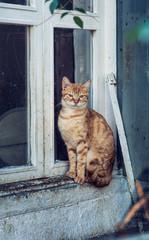 Wachsame Katze auf Fensterbank