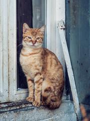 Wachsame Katze sitzt auf Fensterbrett