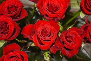весна, цветы розы