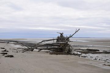 Mitchelleville Beach