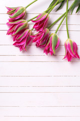 Fresh  spring pink  tulips  on white  painted wooden planks.