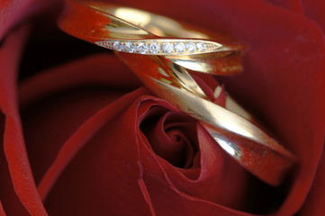 Wedding bands embedded softly in delicate red rose petals.