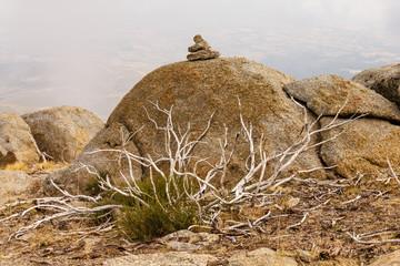 Rocas graníticas y vegetación seca. Sierra de Gredos, Ávila, España.