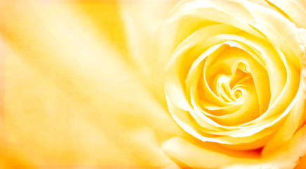 Grungebanner met gele roos en papiertextuur
