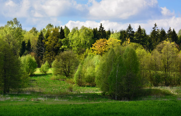 Green spring landscape with meadows and trees