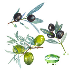 Olive branch. The branches of the olive tree. Watercolor painting. Can be used for postcards, prints and design