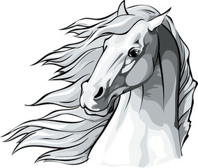 Horse head with mane flowing in the wind.