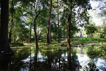 Green Jungle in Cambodia