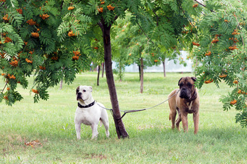 Two dogs under a tree