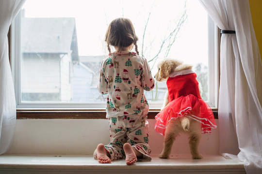 Girl in pyjamas looking out the window with golden retriever puppy dog