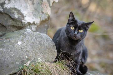 Gatto nero all´aperto