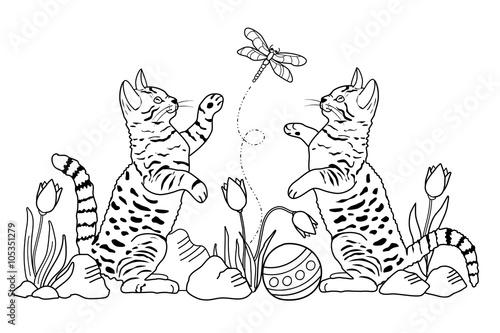 Katzen (Malvorlage)\
