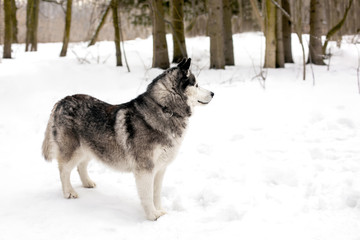 Faithful dog is waiting