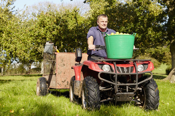 A man driving a quad bike and trailer, with tubs full of apples in an orchard,