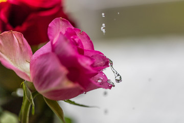 rosen und wasser