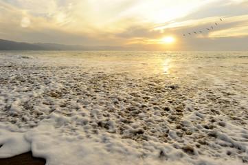 Ocean Sunset Birds