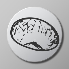 brain grey vector icon on round button with shadow