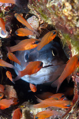 conger-eel is hiding