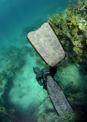 Wall Mural - Free diving in ocean with coral