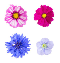 Collection of different flowers isolated on white background